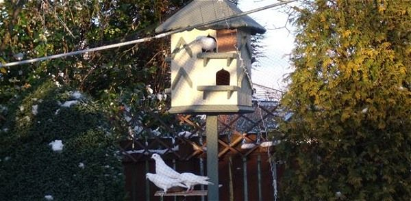 Doves living in a dovecote in England