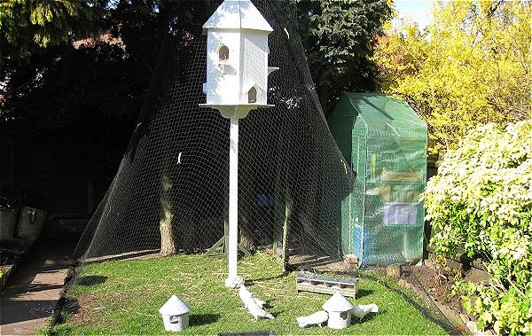 Garden Fantail Doves living in a Dovecote